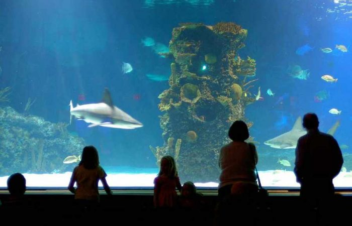national-marine-aquarium-700x450
